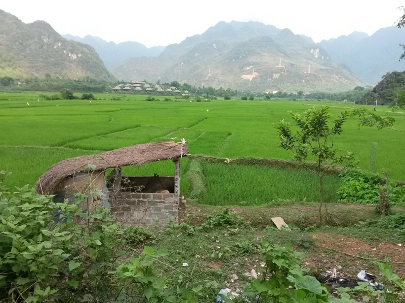 Les rizières qui s'étendent jusqu'aux montagnes
