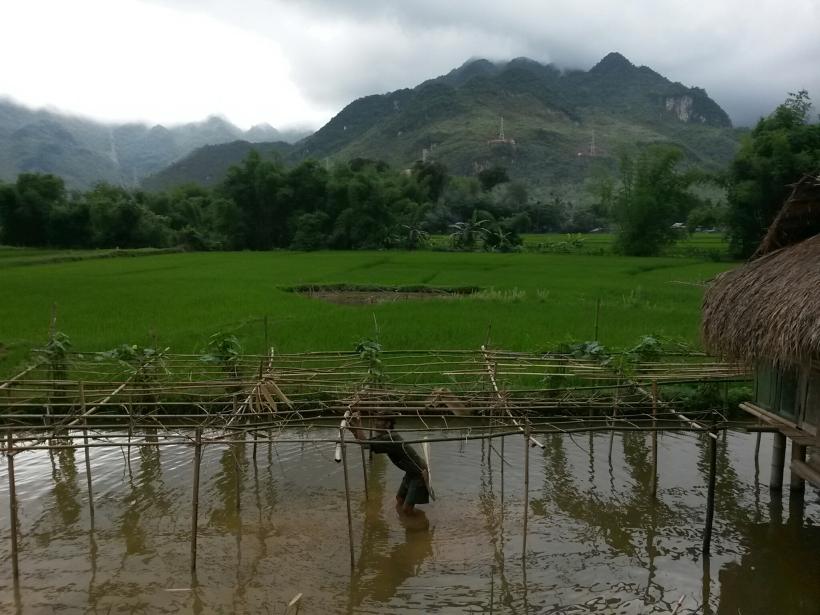 Paysage de rizières autours de Mai Chau